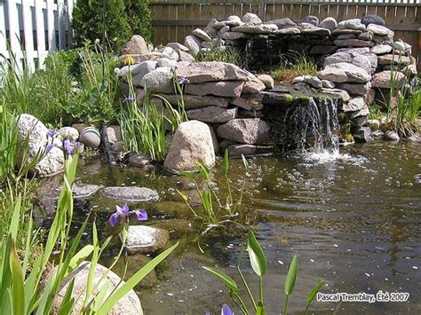 build backyard pond 7 ideas for building a koi fish and backyard pond home