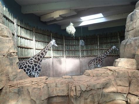 giraffe house picture of lincoln park zoo chicago