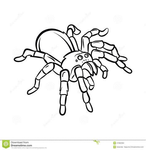 tarantula tattoo stock vector image 47882384