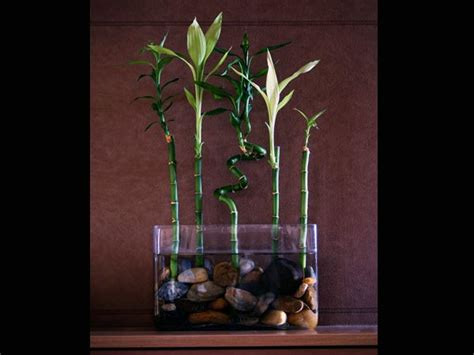 how to decorate home with plants small indoor plants to decorate house photos pics 230296