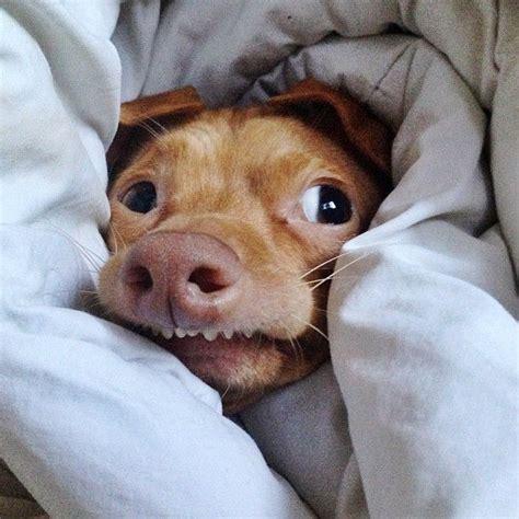Tuna The Dog Meme - tuna melts my heart tuna the dog pinterest cas i