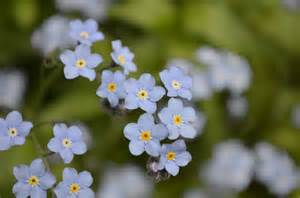 tiny tiny tiny blue flowers she s got the heart of a ballerina