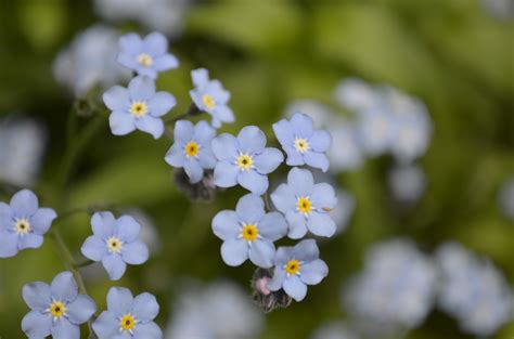 small flowers tiny blue flowers she s got the of a ballerina