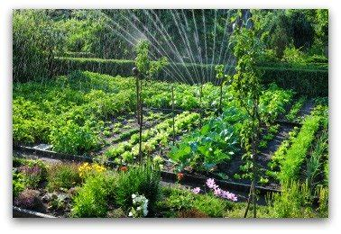 vegetable garden sprinklers vegetable garden irrigation how much and how often