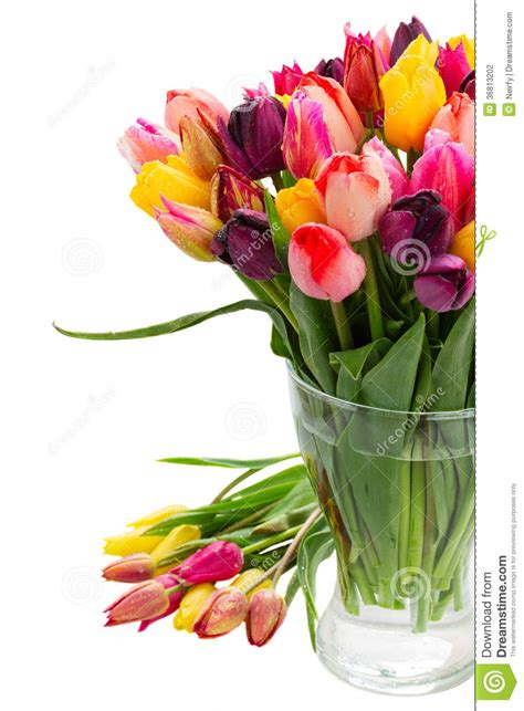 How To Keep Tulips Fresh In A Vase by Fresh Tulips In Vase Up Stock Photography Image