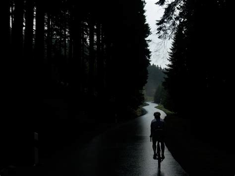 images nature forest silhouette light black