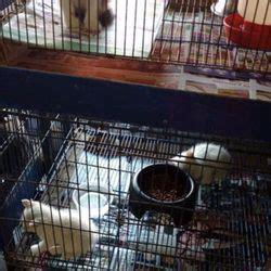 granero california tijuana granero y veterinaria el grano de oro tienda de mascotas