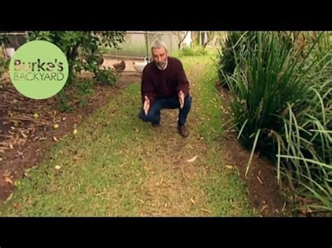burks backyard burke s backyard aerating lawns doovi