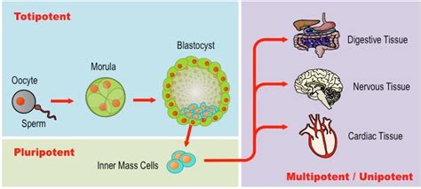 Aqua Bio Stem Cell Activator stem cells bioninja