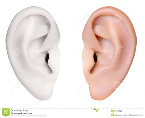 oreille humaine images stock image 37679324