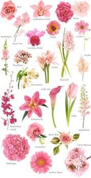 best 25 names of flowers ideas on pinterest white flowers names white names and flowering