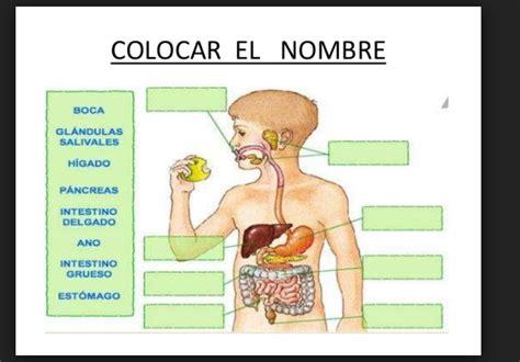 imagenes educativas cuerpo humano educativas imagenes del aparato digestivo del cuerpo