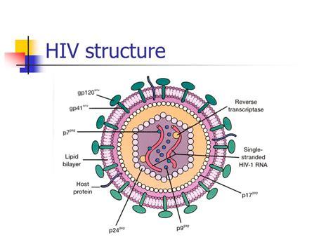 How To Install Glacier Bay Kitchen Faucet Diagram Of Hiv Virus 28 Images In Their Own Words
