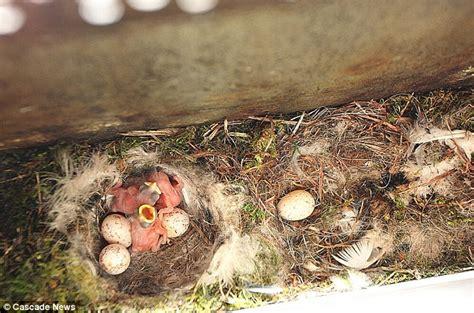 Bird Nest Sarang Burung Mini klikunic jika kotak surat jadi sarang burung