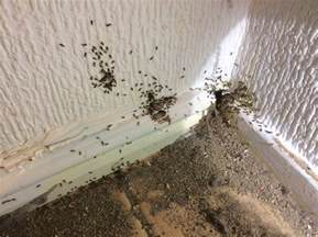 ants archives merseypest pest control liverpool wirral warrington and chester