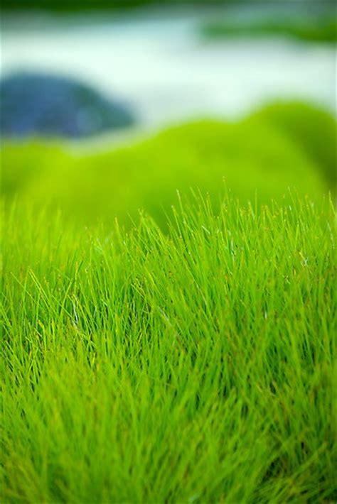 Soft Grass soft grass beautiful pics