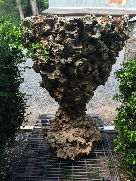 Rock Planters Sale by One Volcanic Rock Planter For Sale At