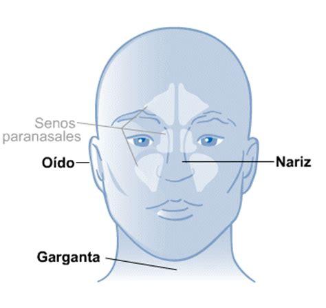 imagenes de ojos y oidos o 237 do nariz y garganta medlineplus en espa 241 ol
