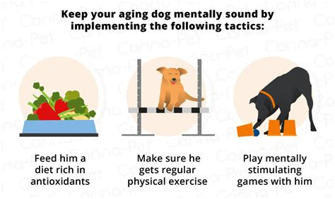 can dogs get dementia dementia cognitive dysfunction canna pet