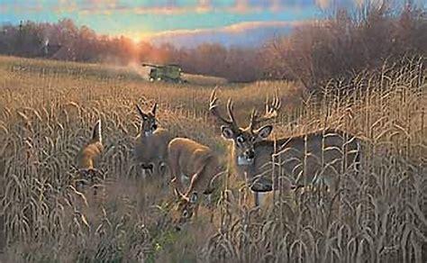 google images deer whitetail deer google search risingsuns set