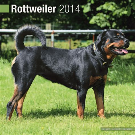 different rottweiler types 2014 rottweiler calendar contest breeds picture