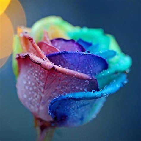 imagenes de flores turquesas bestim incuk 200pcs multicolor arco iris rosa flor