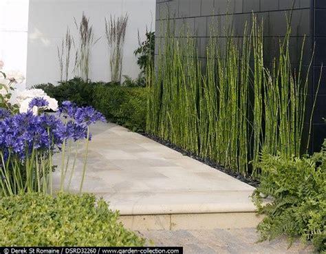 decorar jardin con plantas deserticas equisetum borde pared jardiner 237 a pinterest