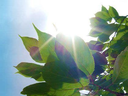 consegna fiori genova piante grasse tutte le offerte cascare a fagiolo