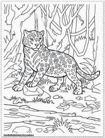 safari coloring pages realistic jungle animal coloring pages realistic