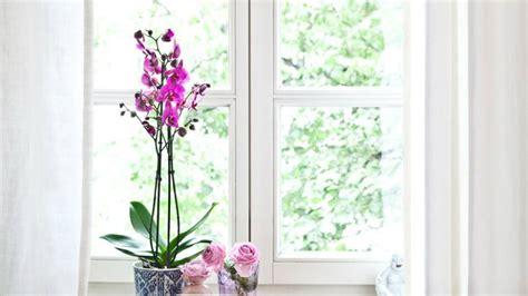 linguaggio dei fiori orchidea la piccola guida di westwing al linguaggio dei fiori