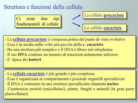 funzioni della struttura e funzioni della cellula ppt