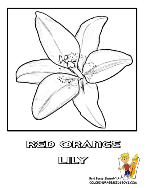 tiger lily coloring page luxurious coloring flower picture lily free flower