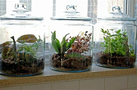 kitchen window terrarium terrarium on pinterest succulent terrarium moss