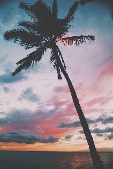 palm tree wallpaper marci1900