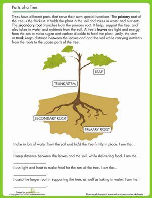 why are plants green worksheet 7 2 7 best images about drawing on trees a tree and activities