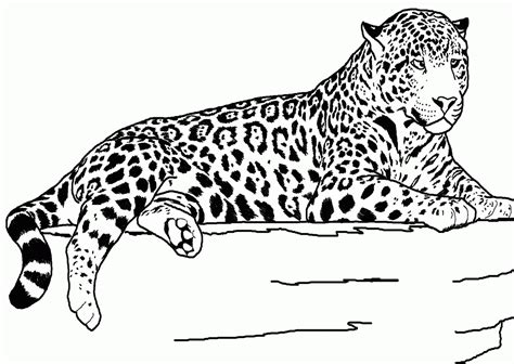 coloring page cheetah cheetah printable coloring pages coloring home