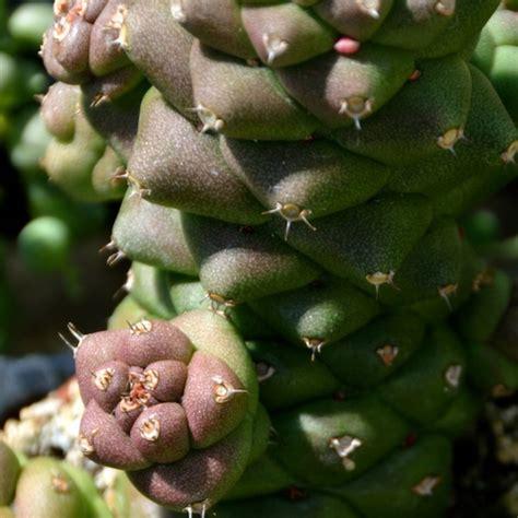 pflanzen direkte sonne pflanzen direkte sonne mgen sie kann hell bis schattig