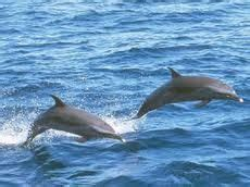 virginia aquarium dolphin watching boat trips virginia beach on pinterest virginia beach dolphins and