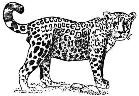 coloring pages jaguar animal free jaguar coloring pages