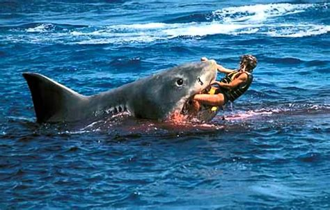 most dangerous in the world 10 most dangerous sharks in the world doovi