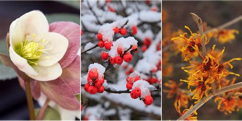 flowers that bloom in winter plants that bloom in winter flowers that develop in the cold