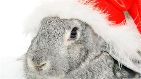 grey rabbit wallpaper full hd wallpaper new year rabbit grey desktop