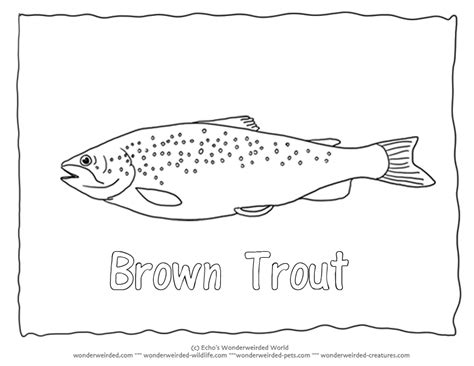 brown trout coloring page coloring pages for free