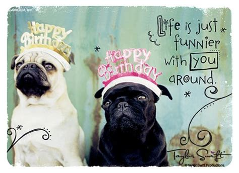 happy birthday pug happy birthday pug happy birthday quotes