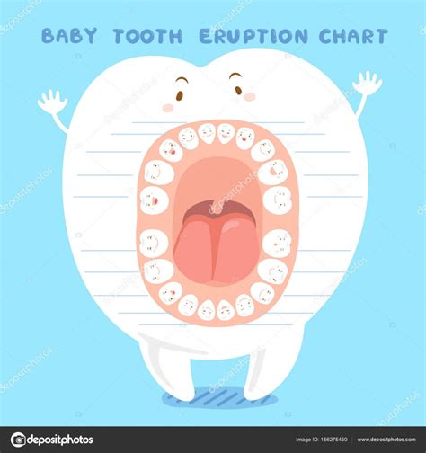 permanent teeth diagram illustration permanent teeth diagram illustration 28 images