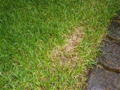 Gegen Ameisen Im Rasen 3020 by Gelbe Stellen Im Rasen Hausgarten Net