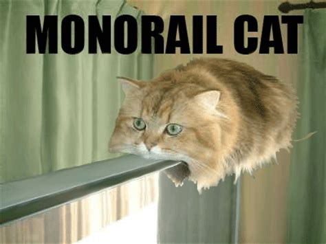 Cheezburger Cat Meme - lolcats page 47 funny cat pictures
