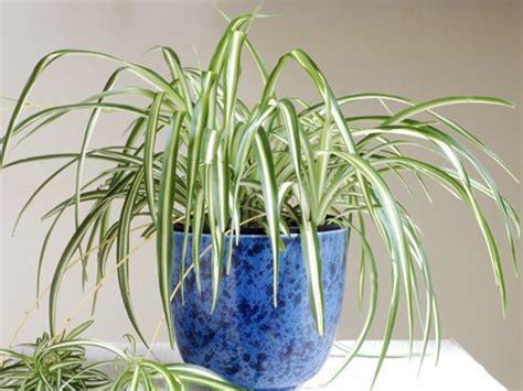 Schöne Eigenschaften by Frische Pflegeleichten Zimmerpflanzen Die Das Interieur