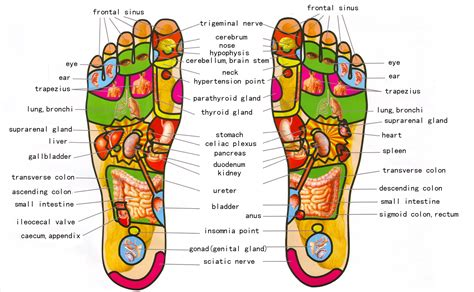 foot diagram the gallery for gt reflexology chart
