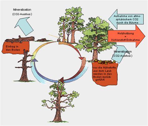 Totholz und alte Bäume > Totholzdynamik > Holznutzung und